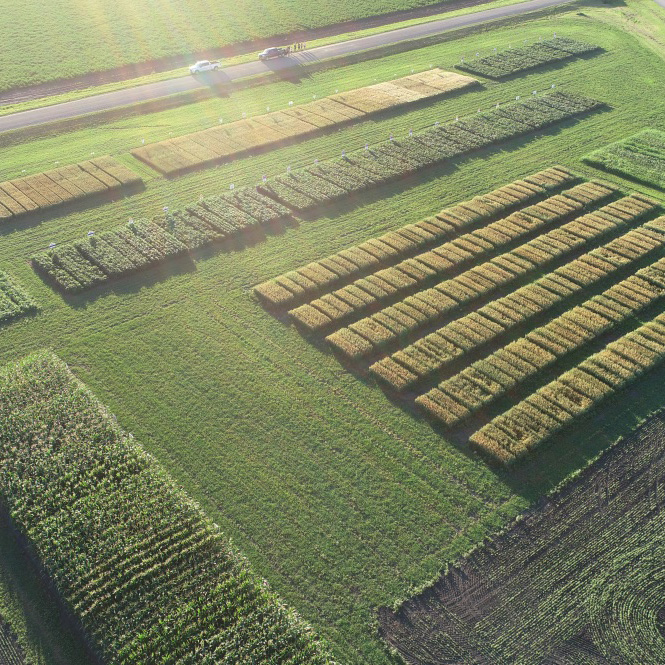 aerial view seed production